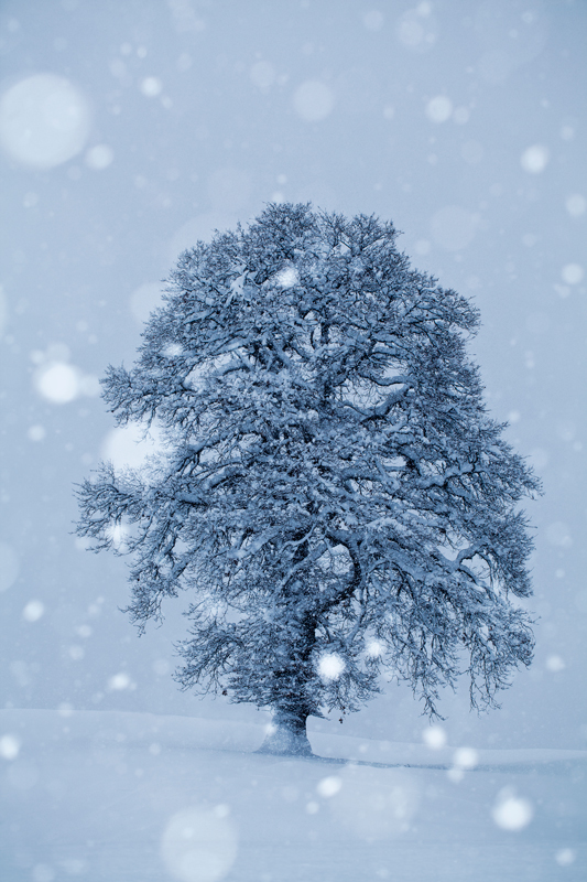 Allein im Schnee
