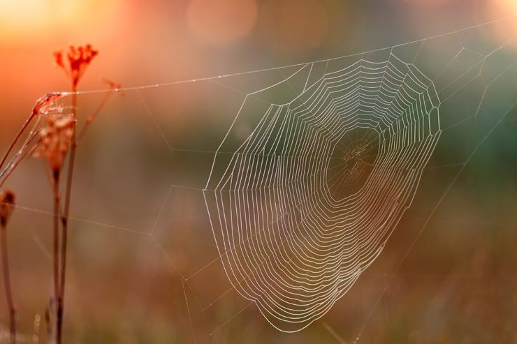 Spinnennetz im ersten Licht