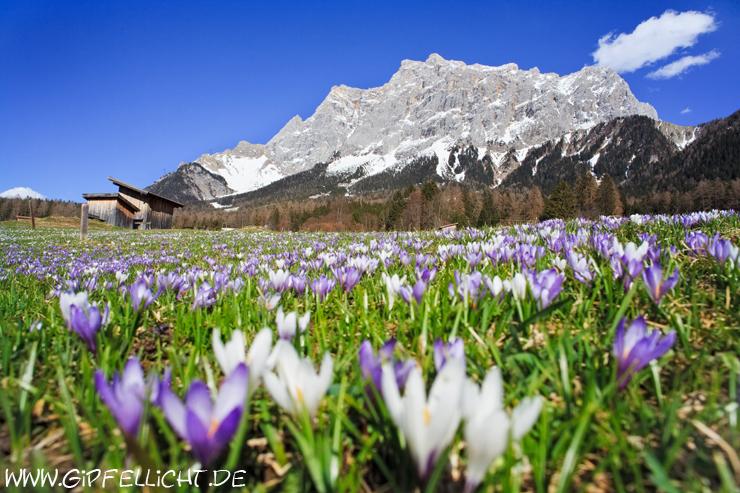 Blick zur Zugspitze