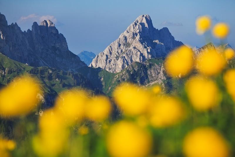 trollblumen vor der gehenspitze